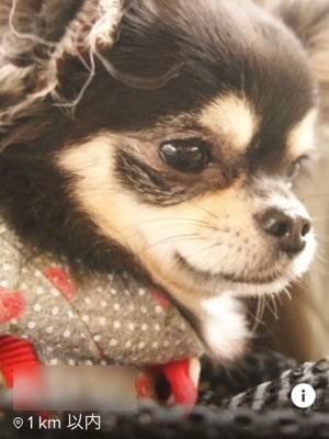 マッチングアプリの犬